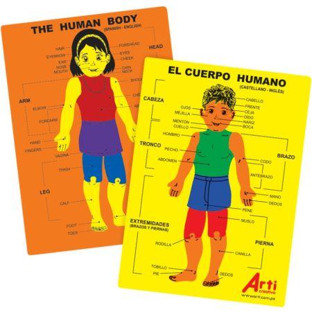 Juego de Encaje de Goma Eva El Cuerpo Humano x 1 Unidad