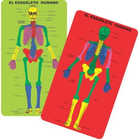 Juego de Goma Eva de Encaje Esqueleto Humano